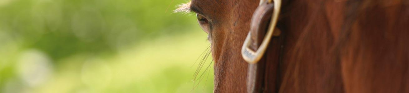 tierarztpraxis_hoellervet_layers_pferd